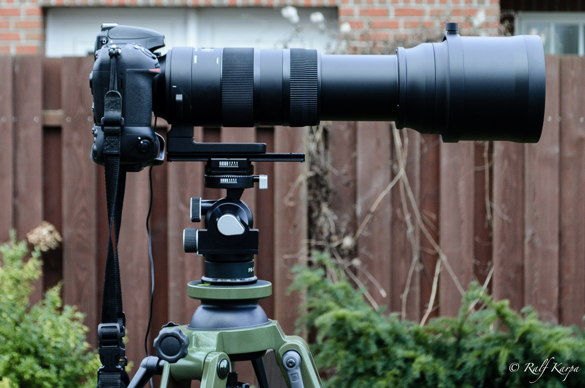 D800 with Sigma 150-600